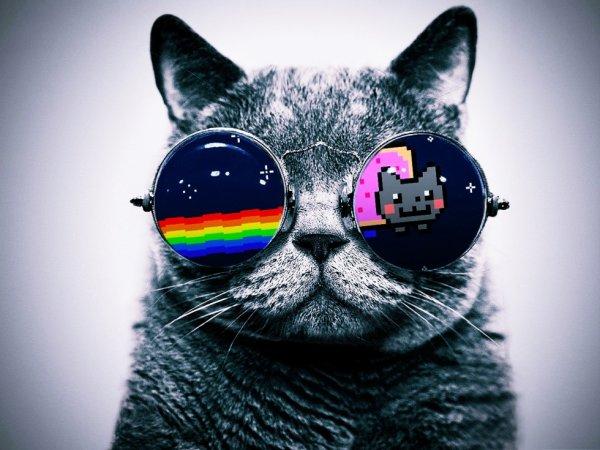 Cahat Lunette Nyan Cat