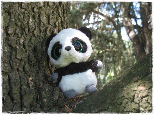 Tao dans un arbre.