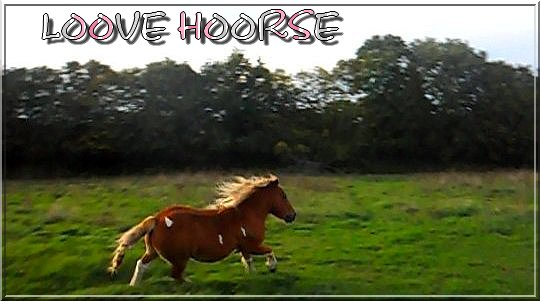 Loove Hoorse, Une Vraie Passion !