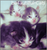 Be4autiful-Cats