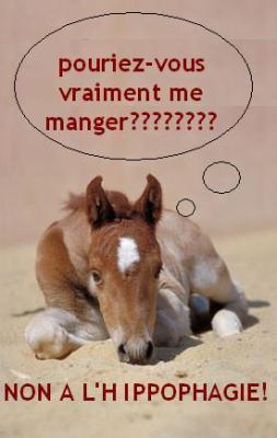 OohH... Les chevaux, je les Kiff trOop !!!!!