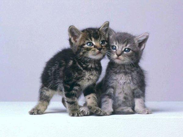 Tiens, des jumeaux...