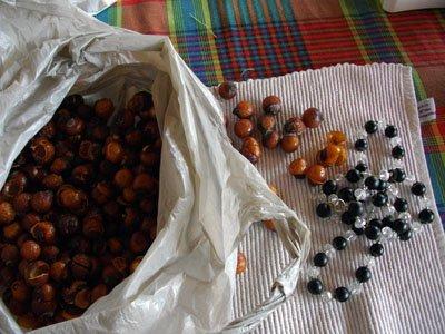 perles de l'arbre à savon