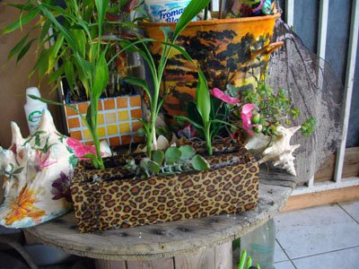 récup....une mini jardinière