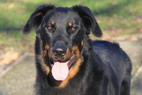 ton chien qui fait genre de te mordre pour jouer avec toi c'est trop mignon je t'aime ma gosse Fidji-Chan :3