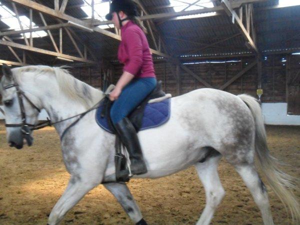 recherche cheval d'obstacle pour cavaliere ayant le 1 er degre en hainaut