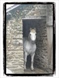 Photo de pony-lili