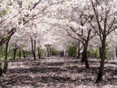 Chapitre 4 : Le jardin perdu.