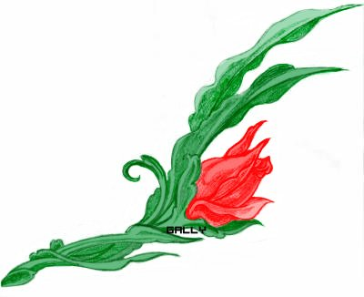 jolie rose en couleur