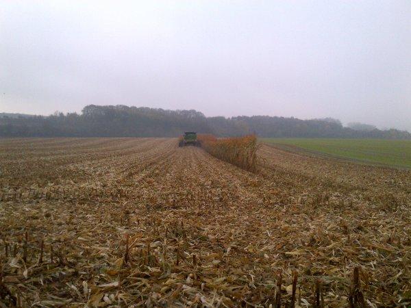 maïs 2012