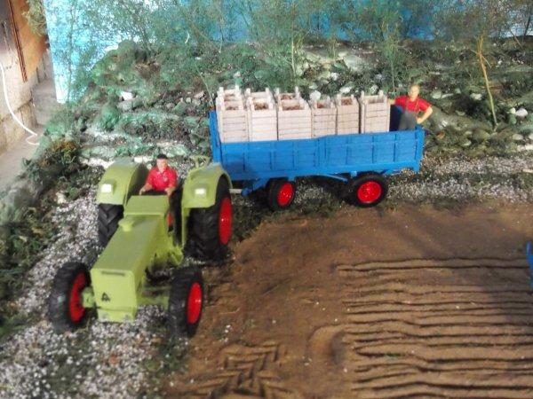 plantation de p de t dans les années 65 / 70