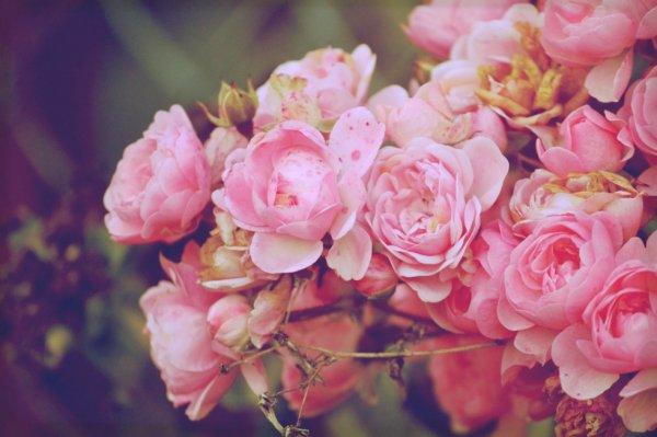 Fleurs !