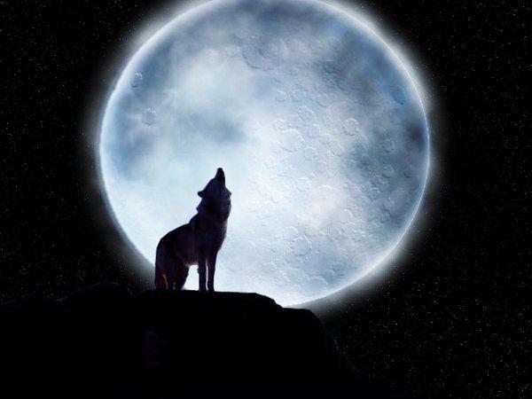 La Malédiction du Loup - Résumé