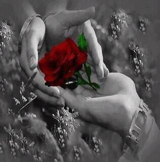 Le bonheur à travers une fleur