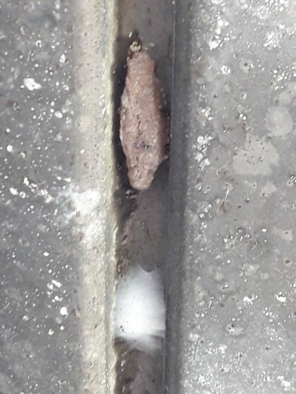 futée l'araignée elle habite juste à côté d'un nid guêpe