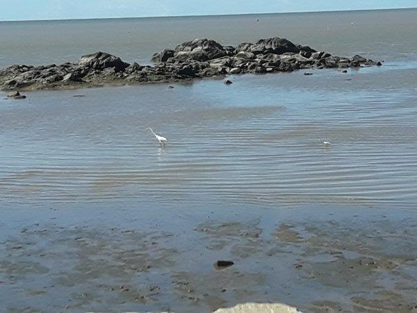 soleil plage oiseau