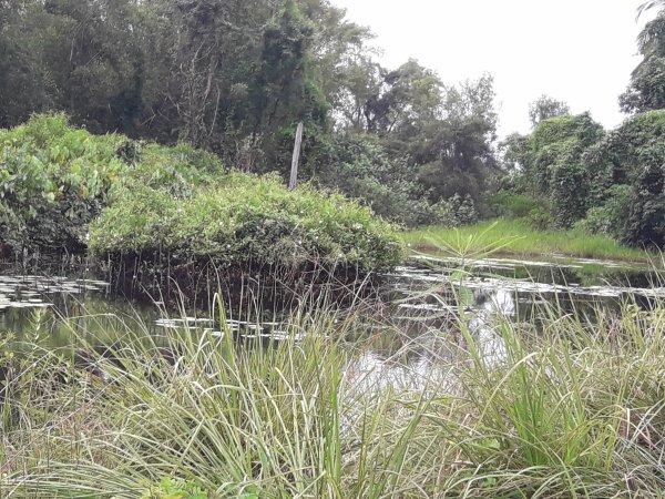 Marais au anaconda et caïman et autres prédateurs