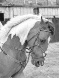 Photo de Matos-D-equitation-X