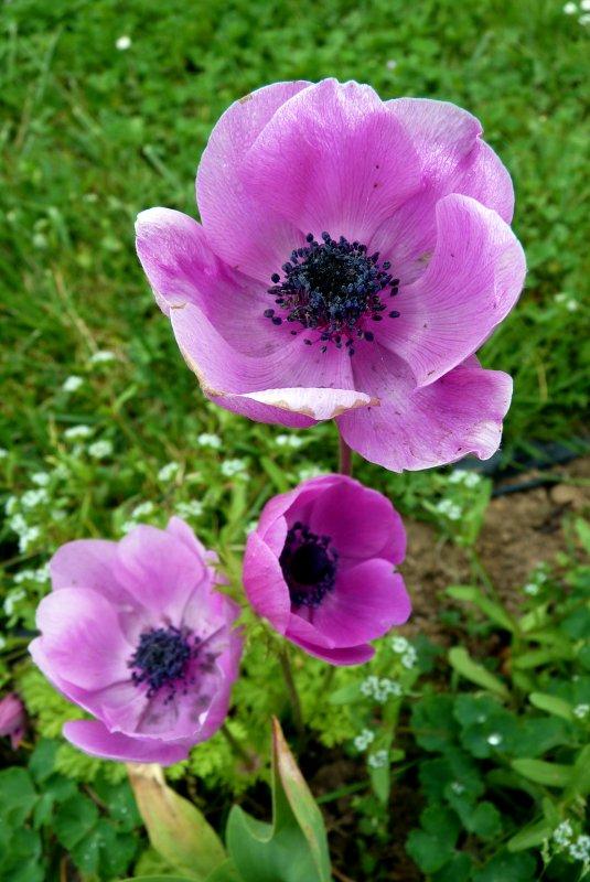 L'arrivée du printemps et quelques photos plus tard...