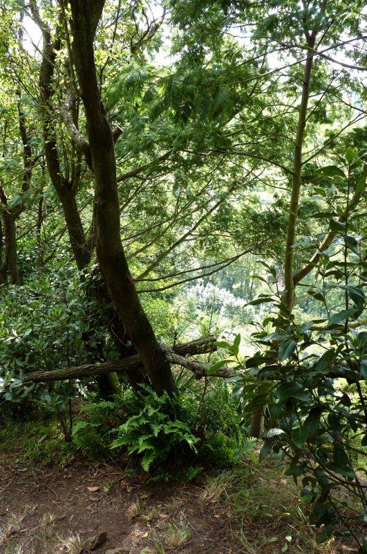 Journées du patrimoine, jardin Maya, n°2