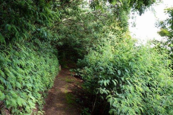 Journées du patrimoine, jardin Maya, n°3