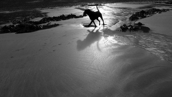 Une balade à la plage... et un chien plus tard