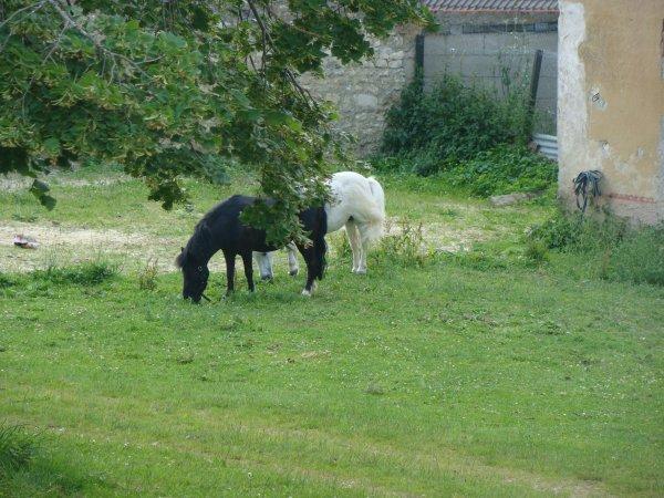 Chaque humain recommence avec chaque cheval, le même travail, la même aventure difficile et périlleuse.