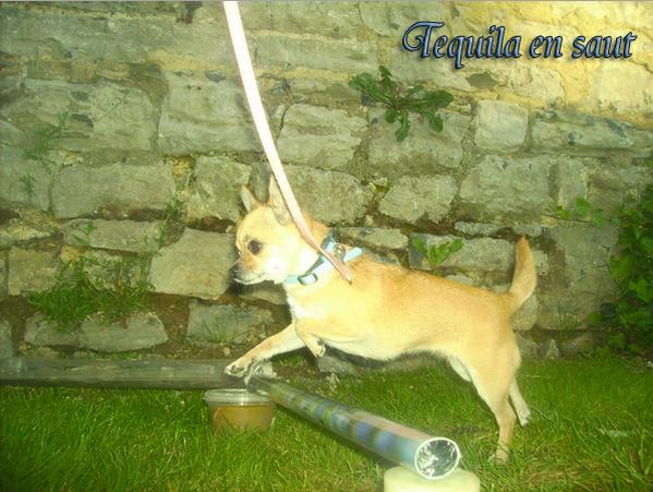 Tequila en saut