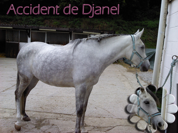 Accident de Djanel