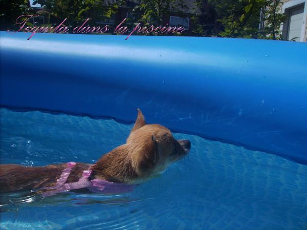 Tequila dans la piscine