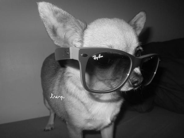 Téquila + lunette