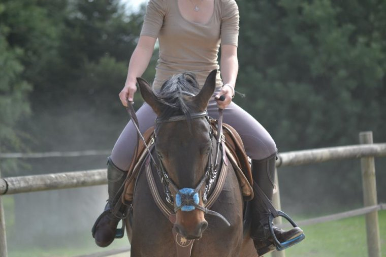Un petit cheval nommé Quartz