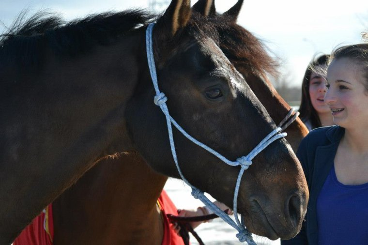 Il était une fois , un petit cheval nommé Quartz