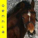 Photo de Qenhia-x3