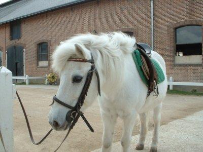 poney blanc a vendre
