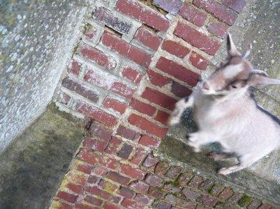 elle s'amuse a sauter de mur en mur :D