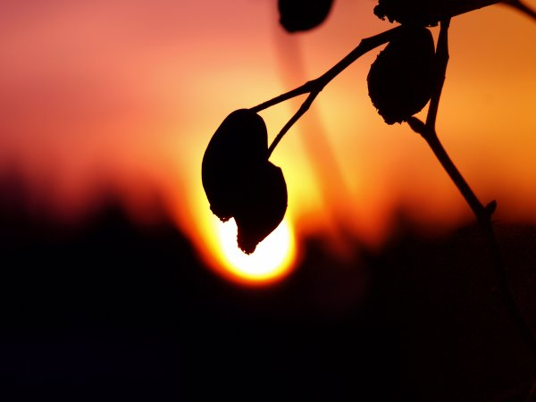 quand le soleil joue avec son mode ,nos yeux sont les spectateurs