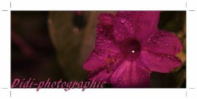 ♥la fleur la nature ♥