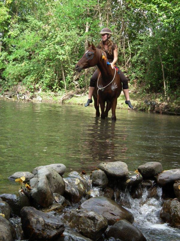 fête du cheval, journée dédiée à fêter la magnificance de cet animal