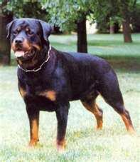 le chien que j adore le plus