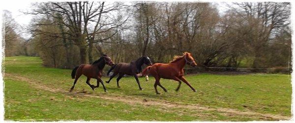 « Avec les chevaux, de la douceur est-ce que cela en vaut la peine ?... Oui, toujours! »