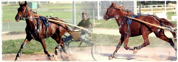 le respect du cheval est la fondation de la liberté..