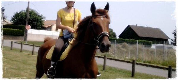 """""""Le cheval enseigne à l'homme la maîtrise de soi, et la faculté de s'introduire dans les pensées et les sensations d'un autre être vivant."""""""