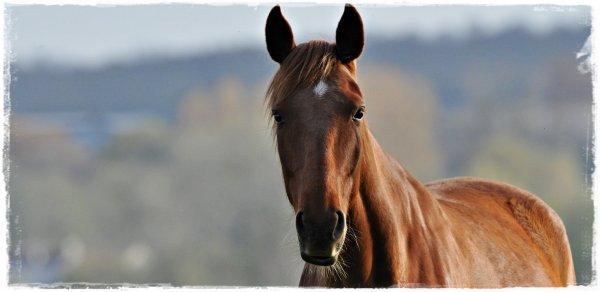 Faites du cheval un compagnon et non un esclave, vous verrez quel ami extraordinaire il est.♥