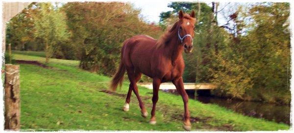 « Si mon cheval et moi tombons, relevez d'abord mon cheval ♞ »