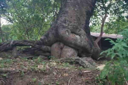 La nature est faite...