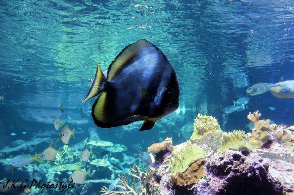 Aquarium de Cherbourg