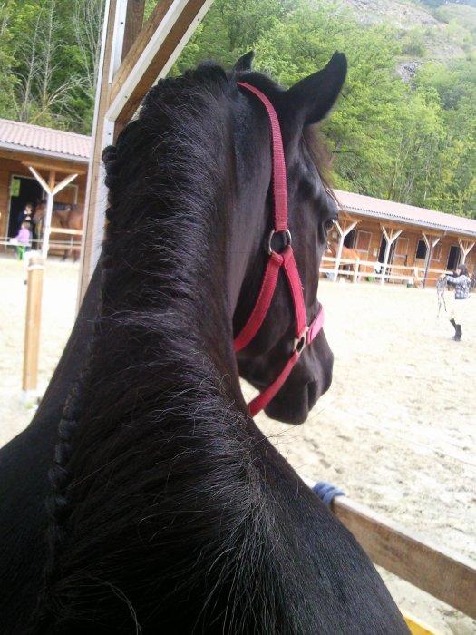 Mieux vaut faire confiance à un cheval sans bride qu'à un discours sans ordre... Tosca ♥