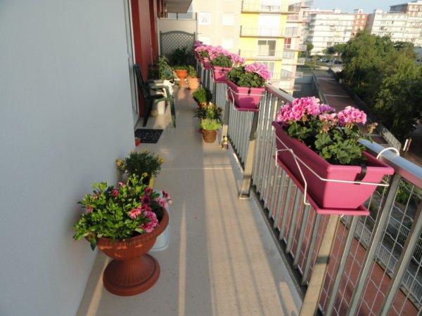 mon balcon fleuri 2013 blog de nanou470263. Black Bedroom Furniture Sets. Home Design Ideas