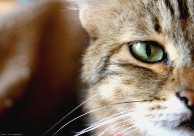 Un chat pas tout a fait ordinaire.